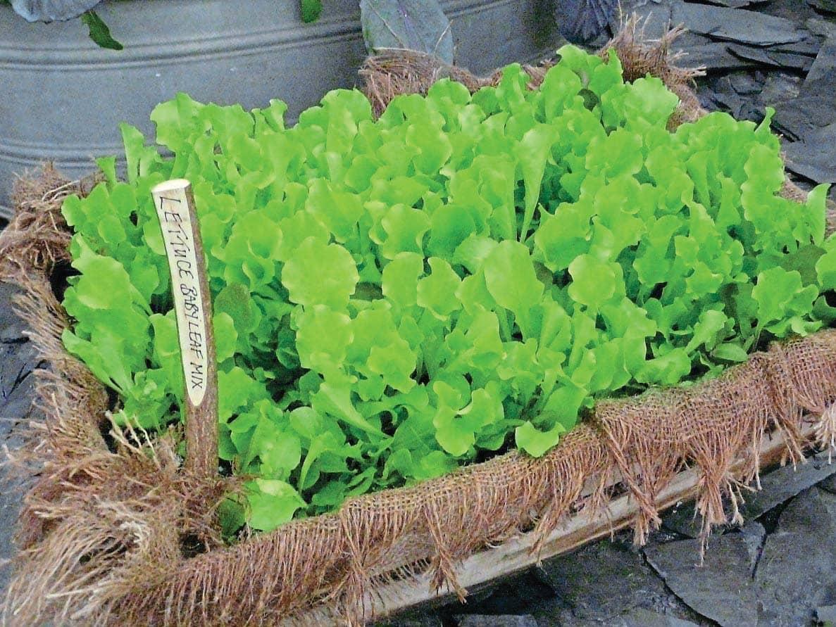 Grow a salad bar