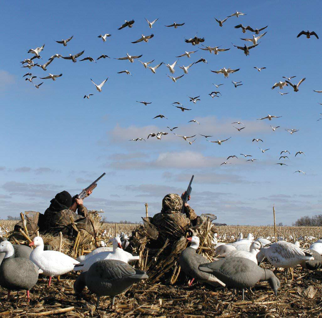 Goose Decoy Spreads