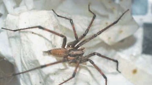 Pranksters Remove Hoax Spider Post From Facebook