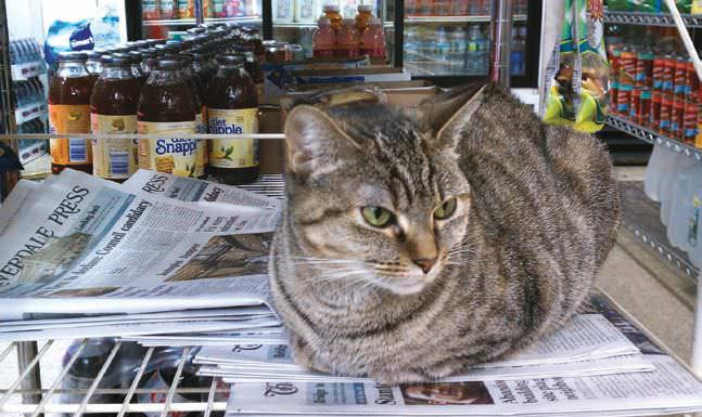 What's A Bodega Cat?