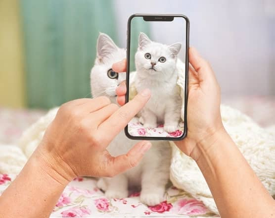 Click - Getting Great Shots of your Cat with a Smartphone