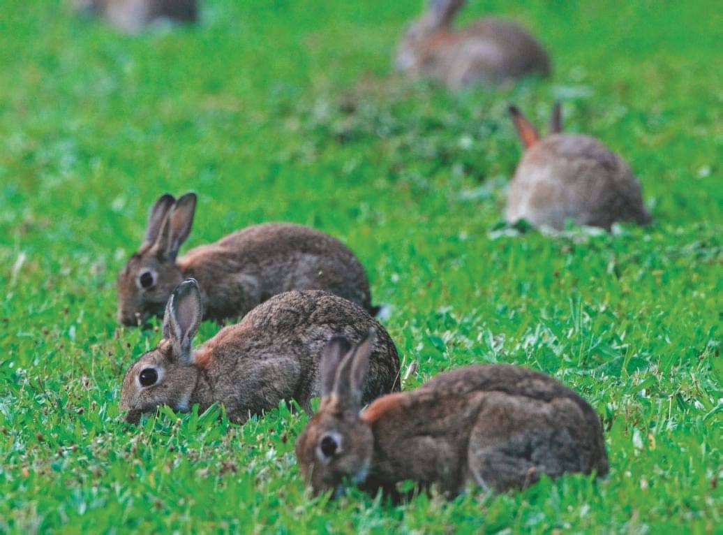 A Turning Point For The Rabbit?