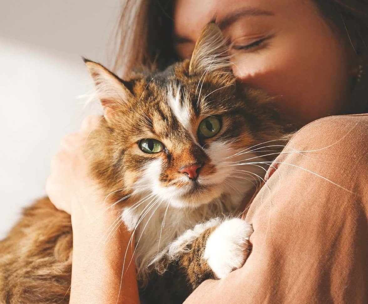 Could your cat CURE YOU?