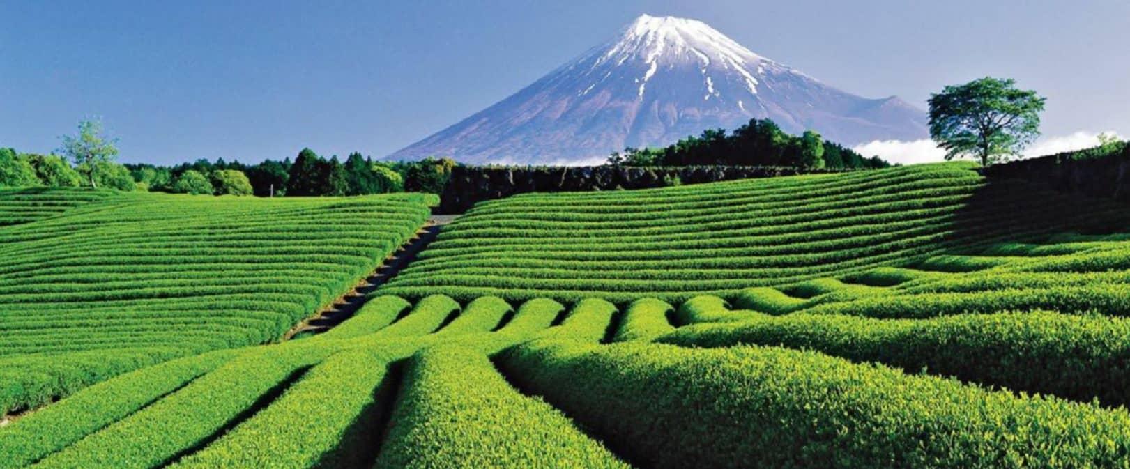 The Green Tea Revolution