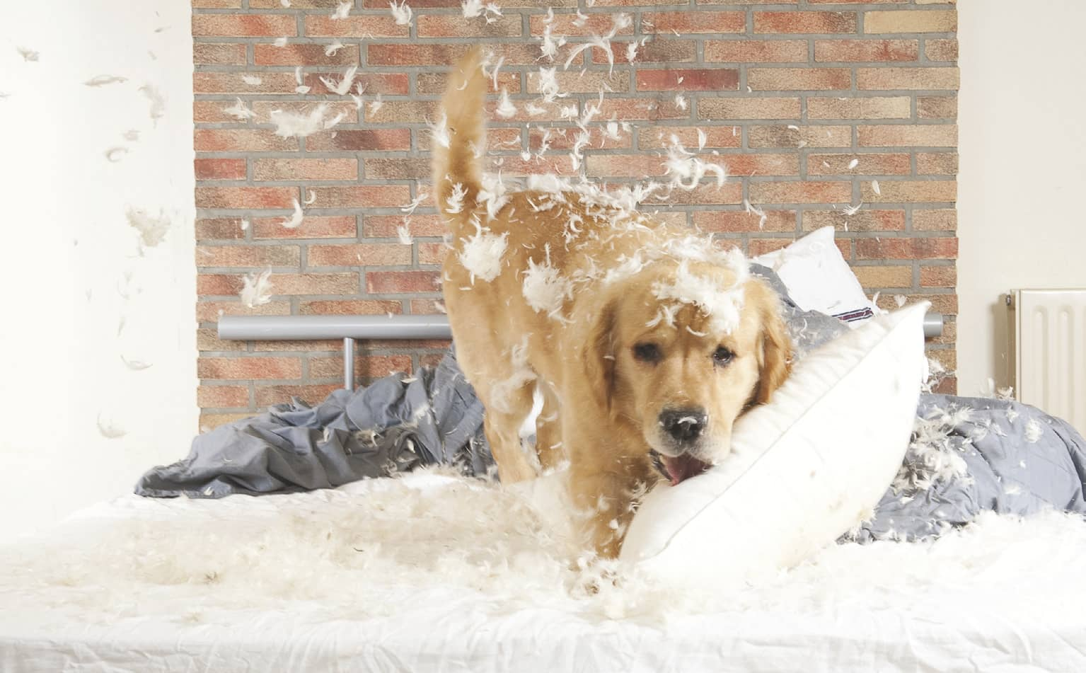 DESTRUCTIVE HABITS IN DOGS AND WAYS TO CORRECT THEM