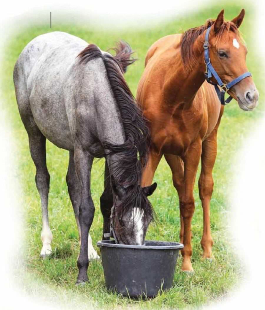 Four Reasons To Review Your Horse's Diet