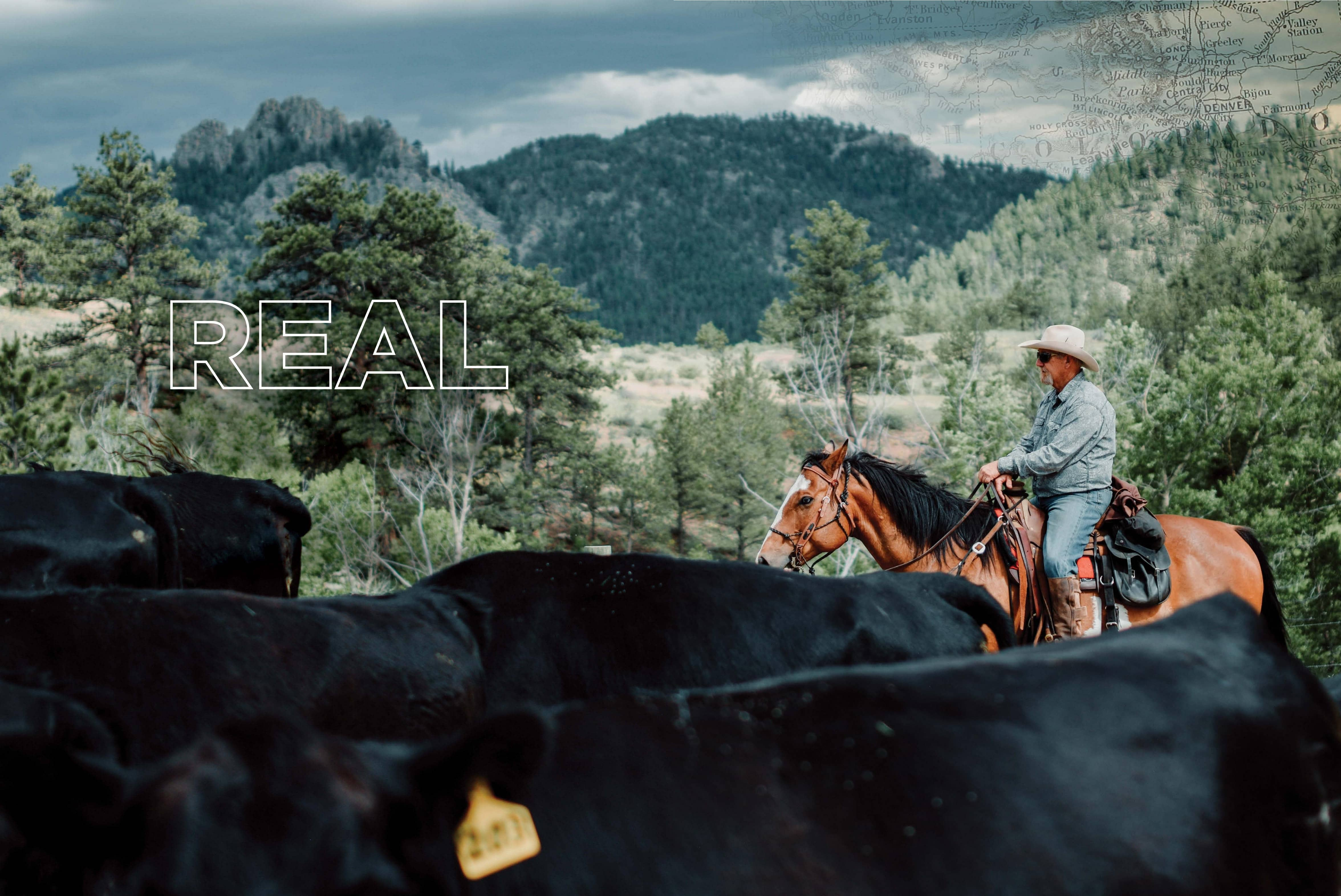 Real Riding: Guest Ranches Catering To Equestrians