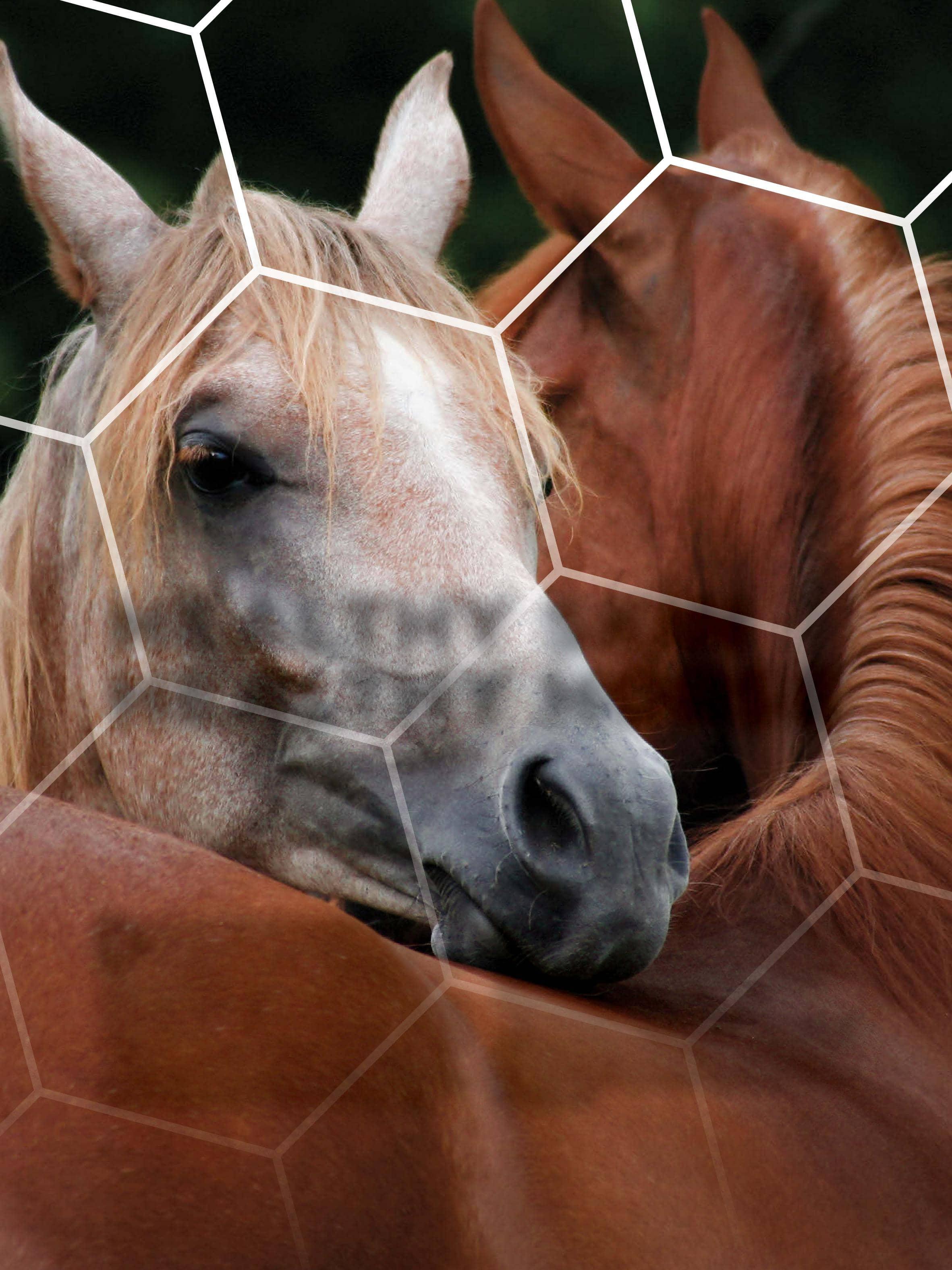 Healthy Skin Healthy Horse