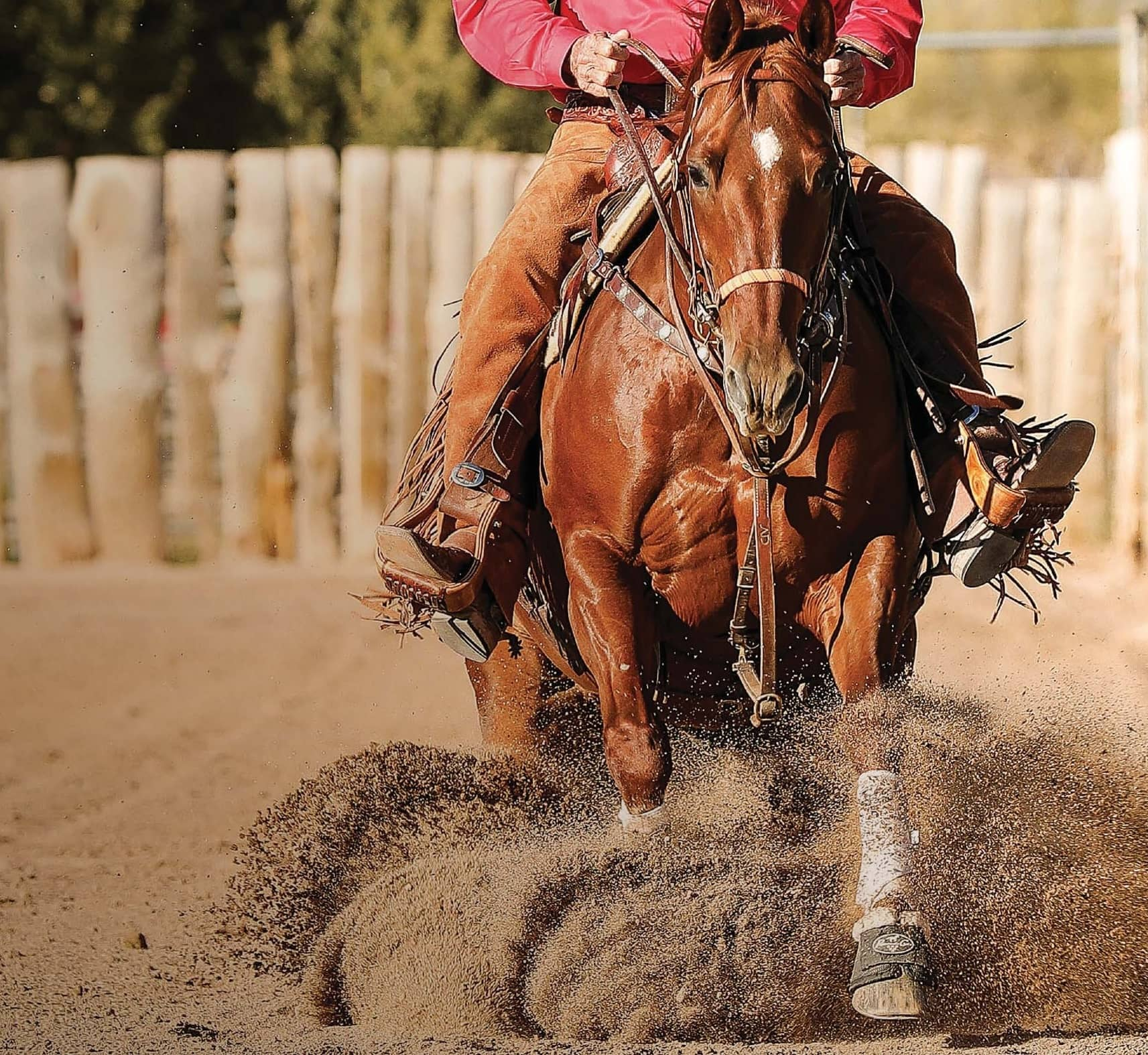 5 INESCAPABLE ELEMENTS OF A WELL-TRAINED HORSE
