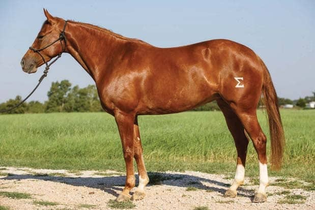 Reined Cow Horse Mares