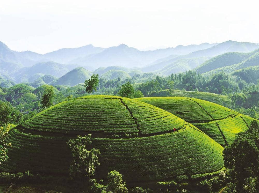 The fabulous Phu Tho tea hills