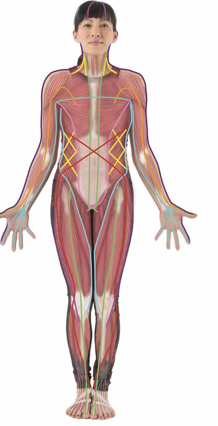 How Fascia Shapes Us