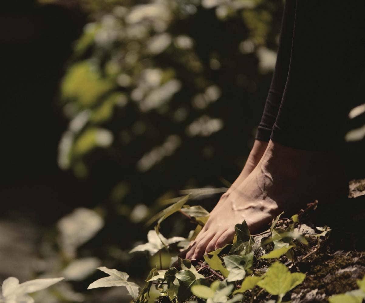 Mossy Meditation