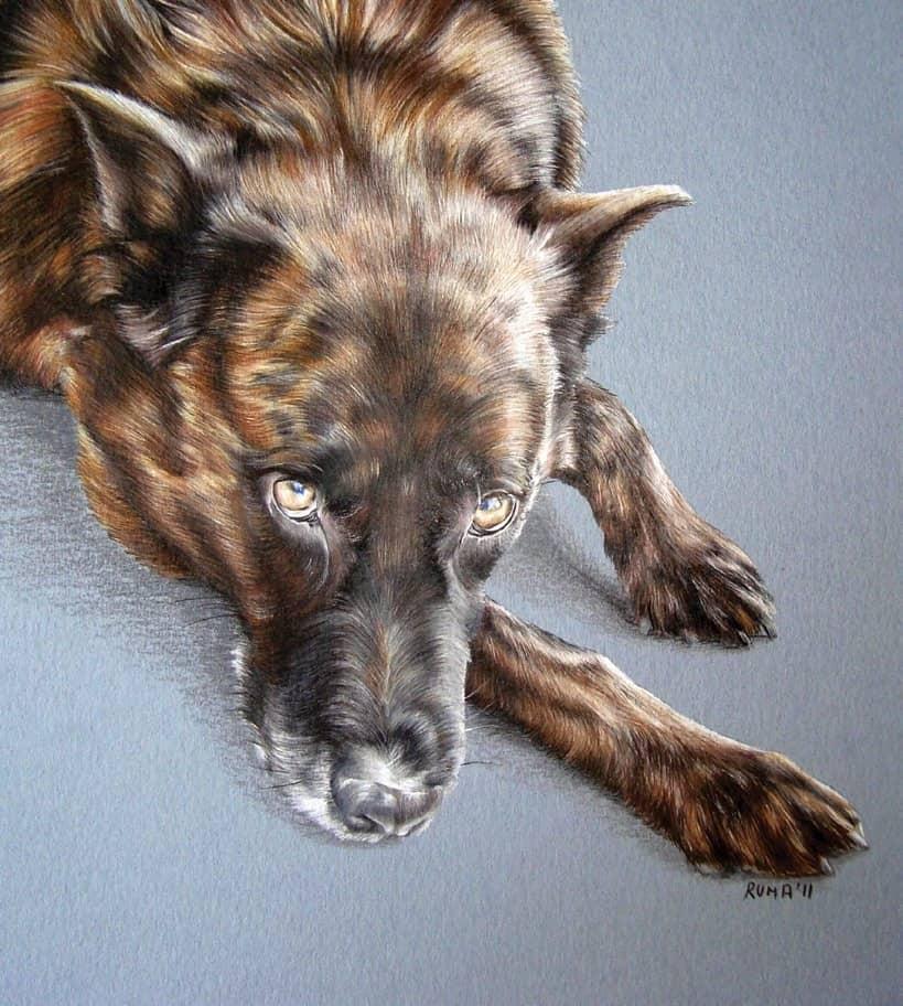 The Dog Portrait Artist