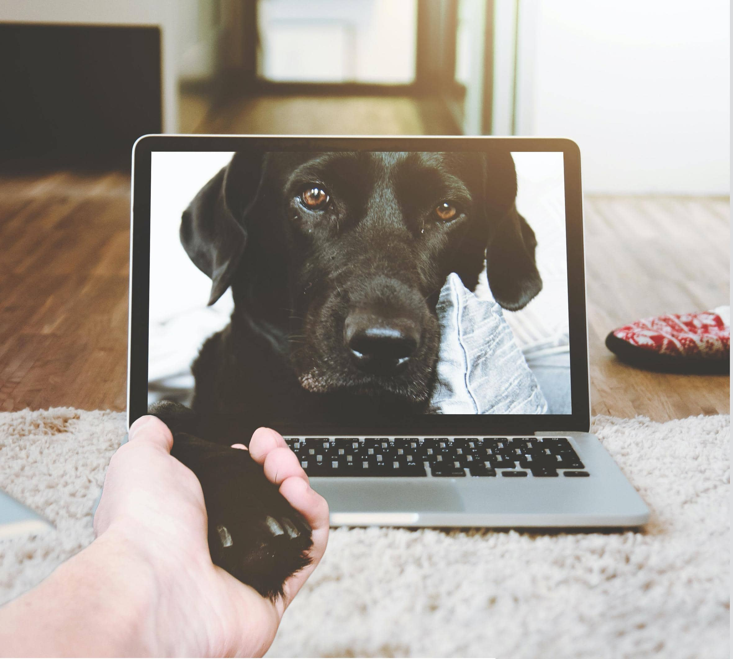 VIRTUAL TRAINING CAN BE GOOD FOR TRAINERS, OWNERS AND DOGS