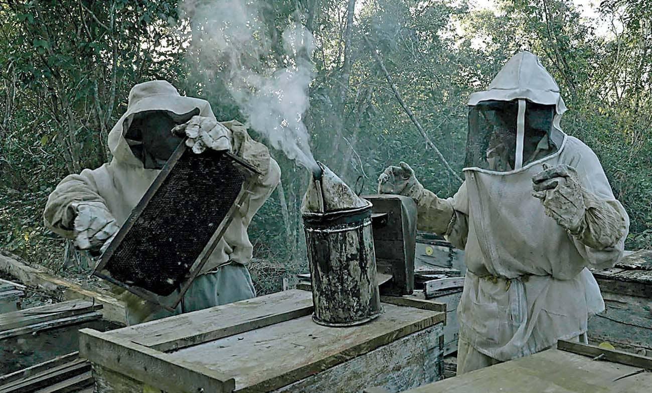 La lucha de los apicultores mayas contra Monsanto