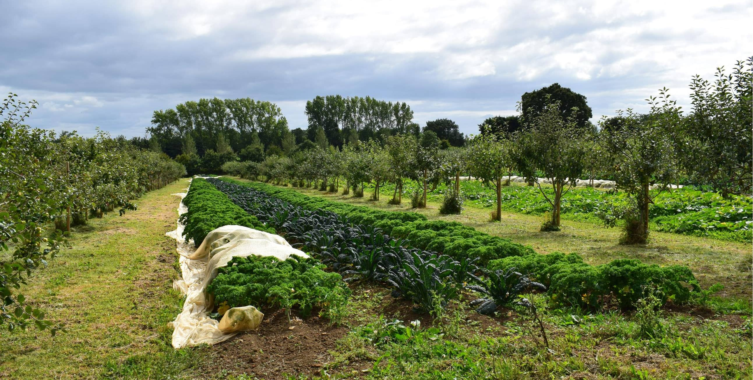 The Benefits Of Agroforestry