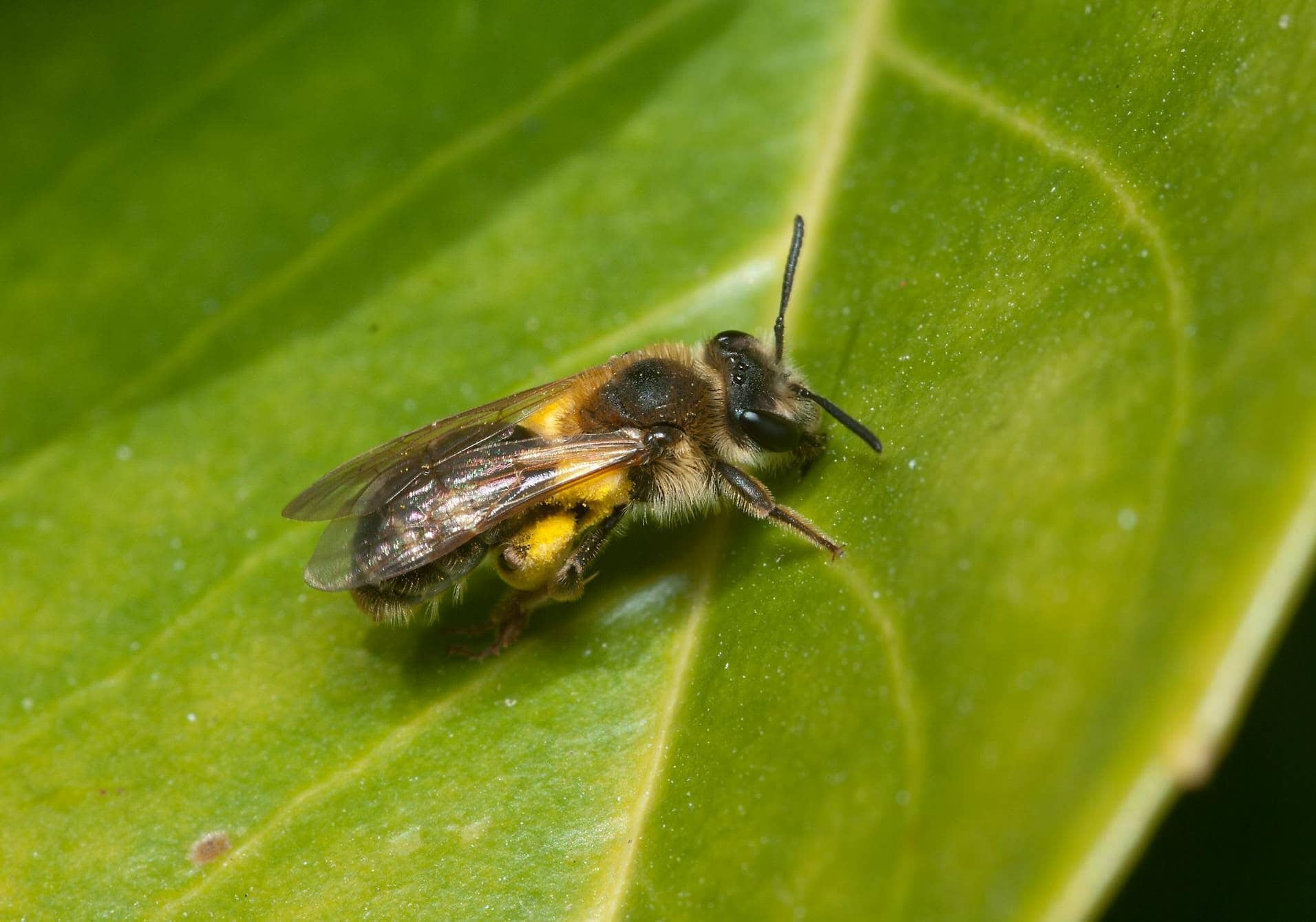 Scientists find the ideal home for solitary bees