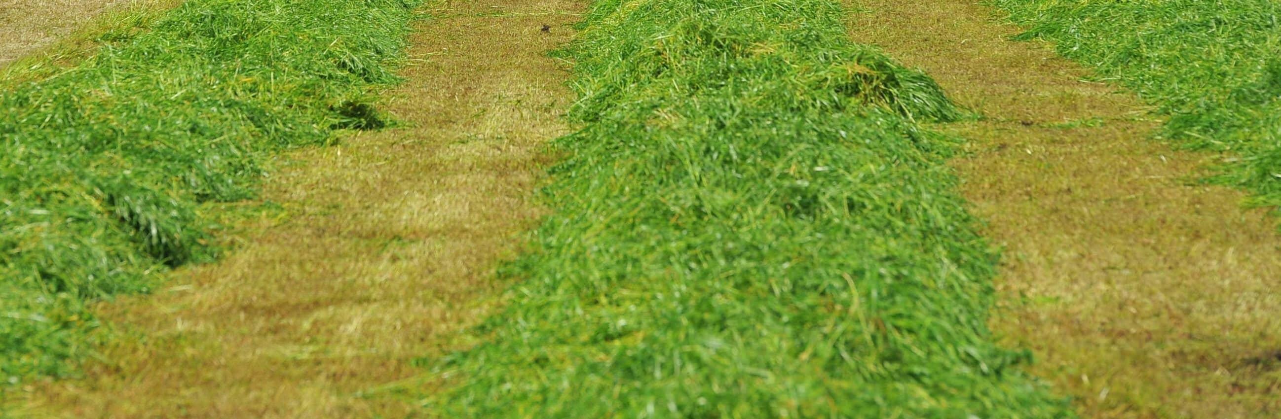Good aftercut fertiliser management essential in 2020