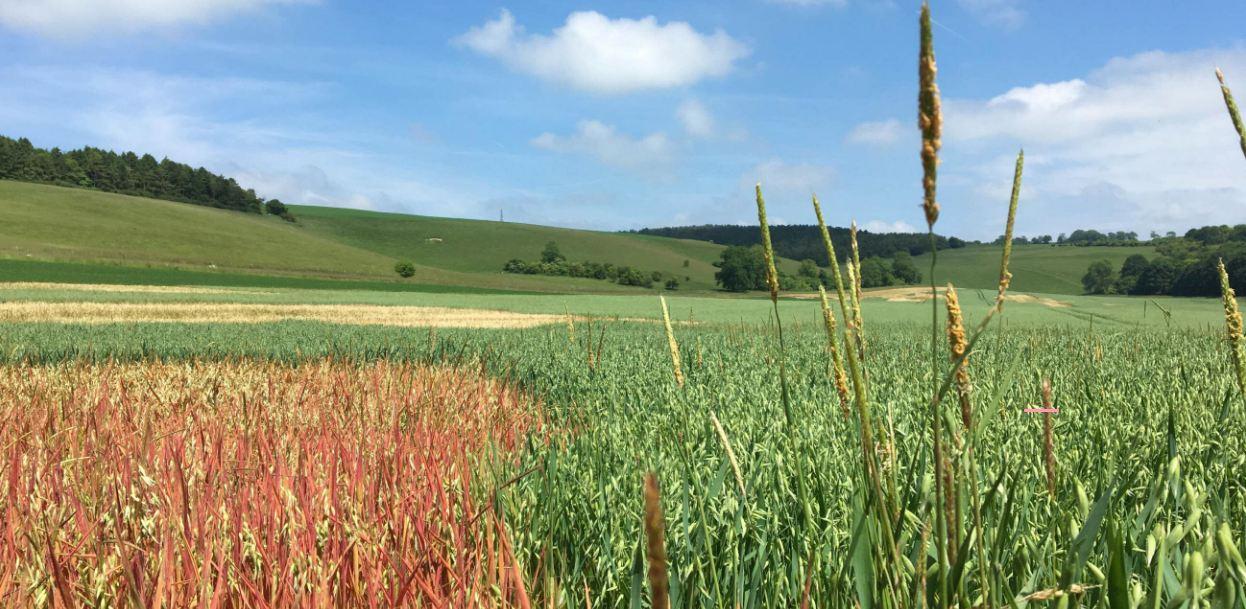 Testing decisions for black-grass viability