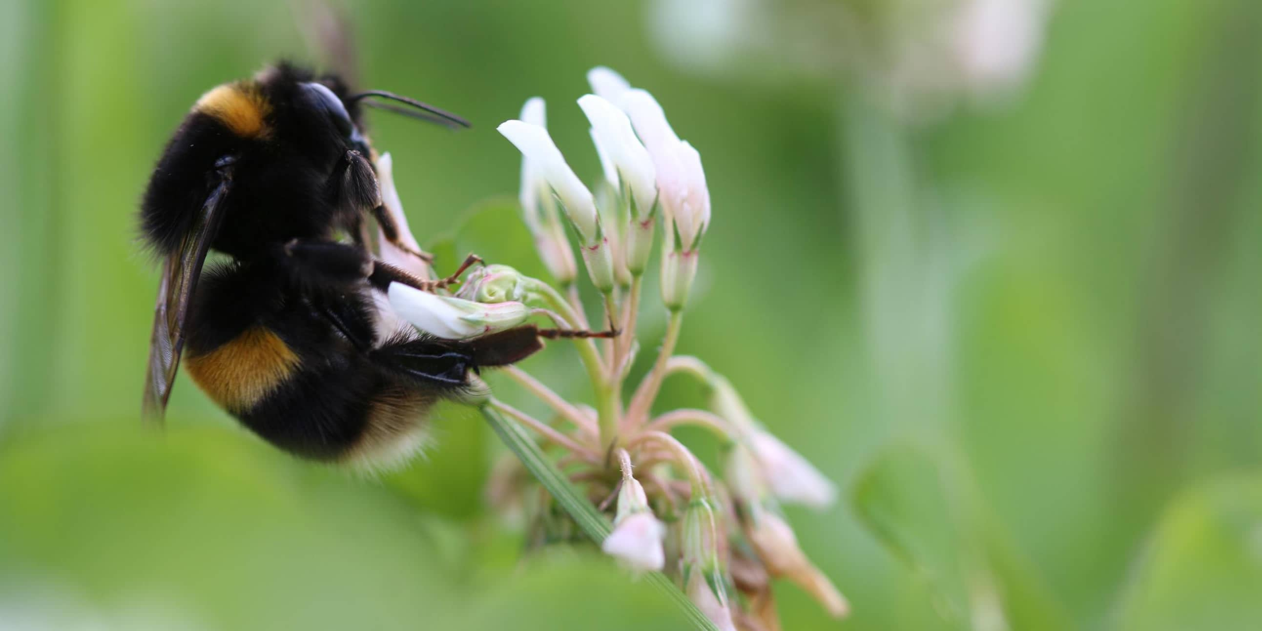 Suffolk pig farmers feed one million bees in pioneering project