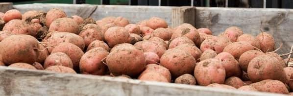 Fairfields Farm Set to Supply Leading Meal Kit Player, HelloFresh