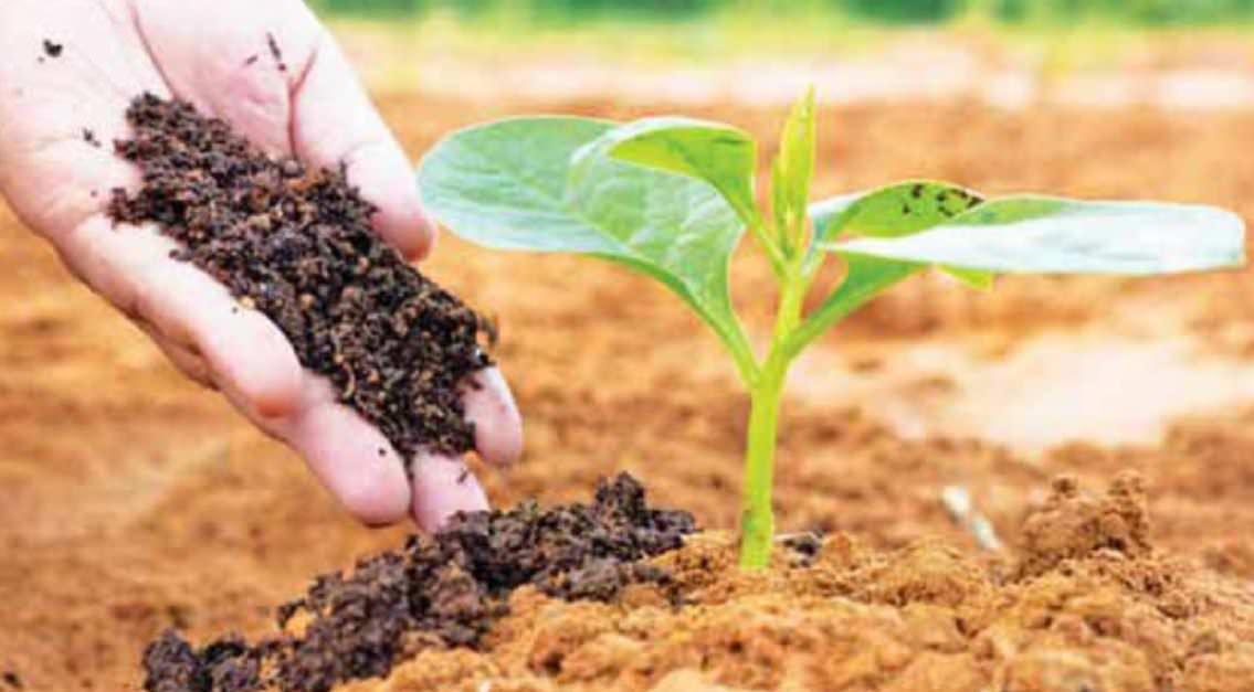 Appreciating Organic Farming