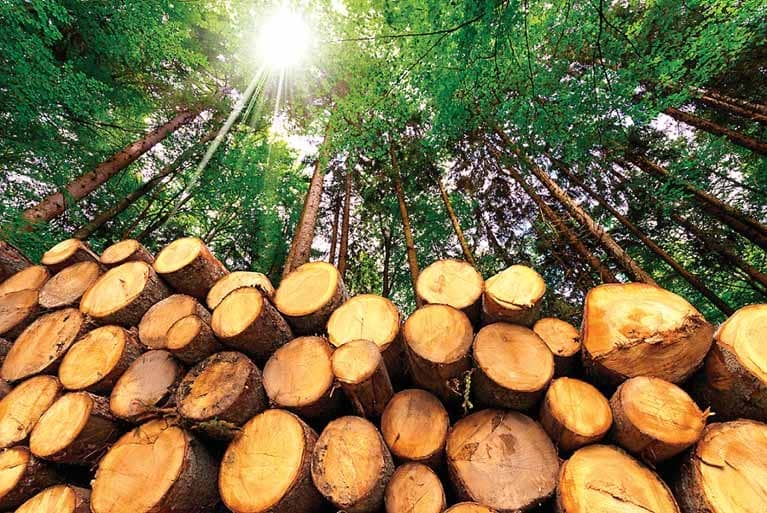 Changing The Way We Look At Cutting Trees