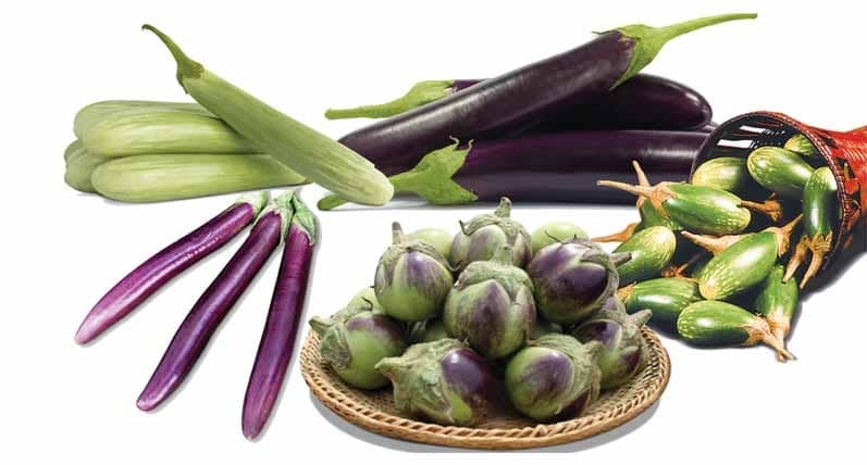 EAST-WEST SEED BRINGS 'MUCHO' SUCCESS TO FARMERS WITH ITS NEW EGGPLANT VARIETY