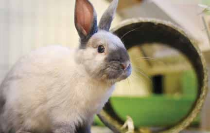 ROAD TO RABBIT FARMING: GUIDE IN RAISING RABBITS AS AN ALTERNATIVE MEAT SOURCE