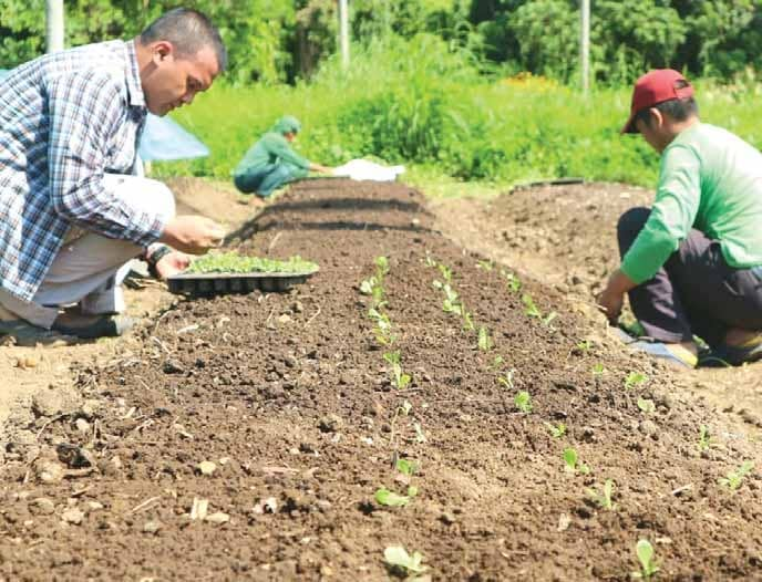 FARMER SHIFTS FROM SPECIALTY PRODUCE TO TABLE VEGETABLES