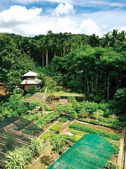 NATURAL FARMING MADE A BUSINESSMAN'S AGRICULTURAL DREAM COME TRUE