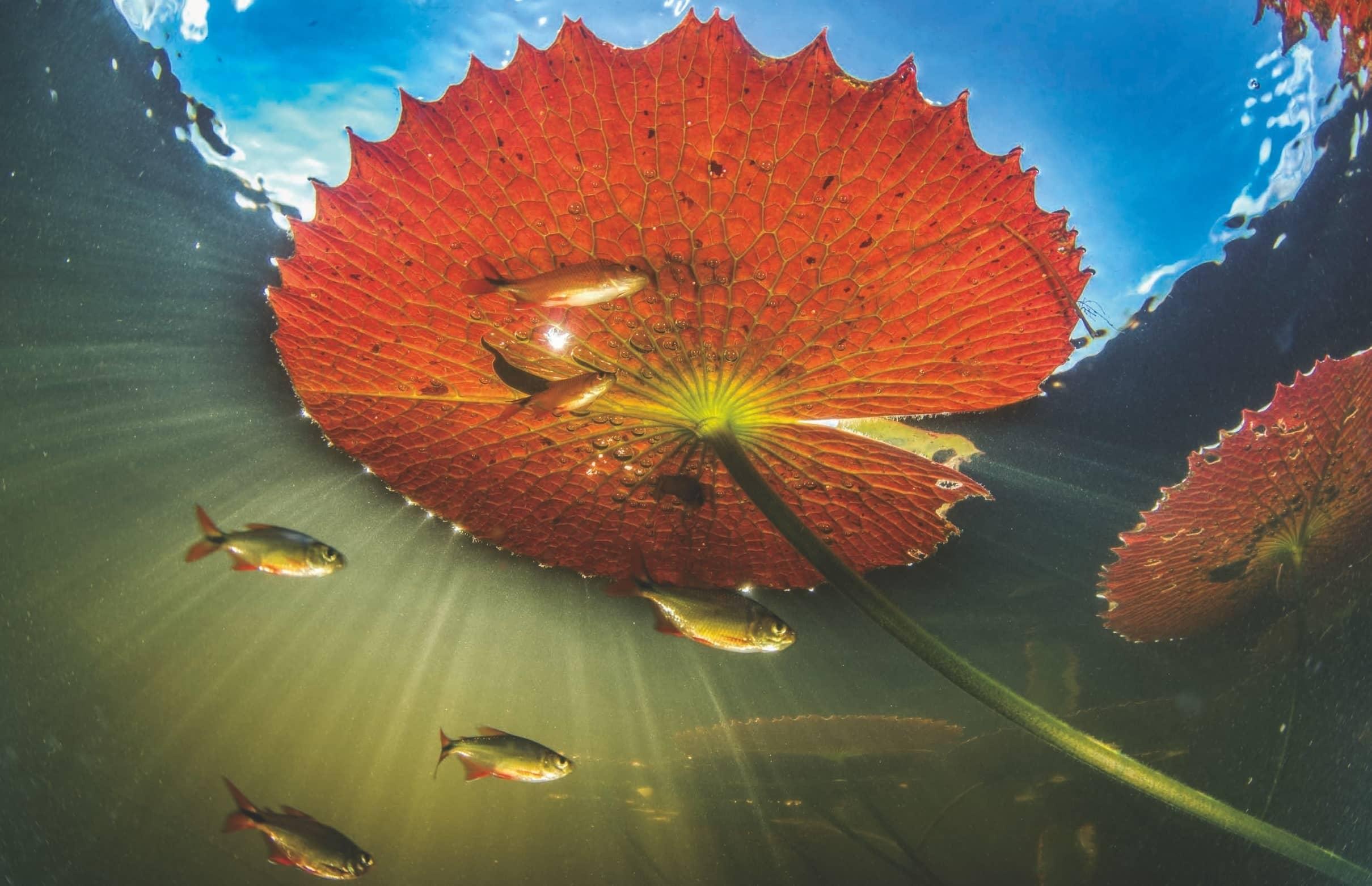 15 historias reales en destinos sustentables
