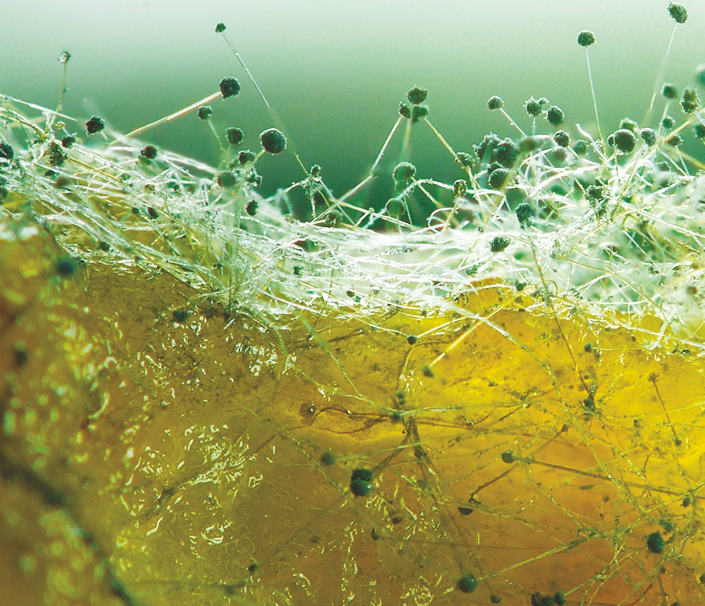UNDERSTANDING AND OVERCOMING THE EFFECTS OF MOLD TOXICITY AND BIOTOXIN ILLNESS