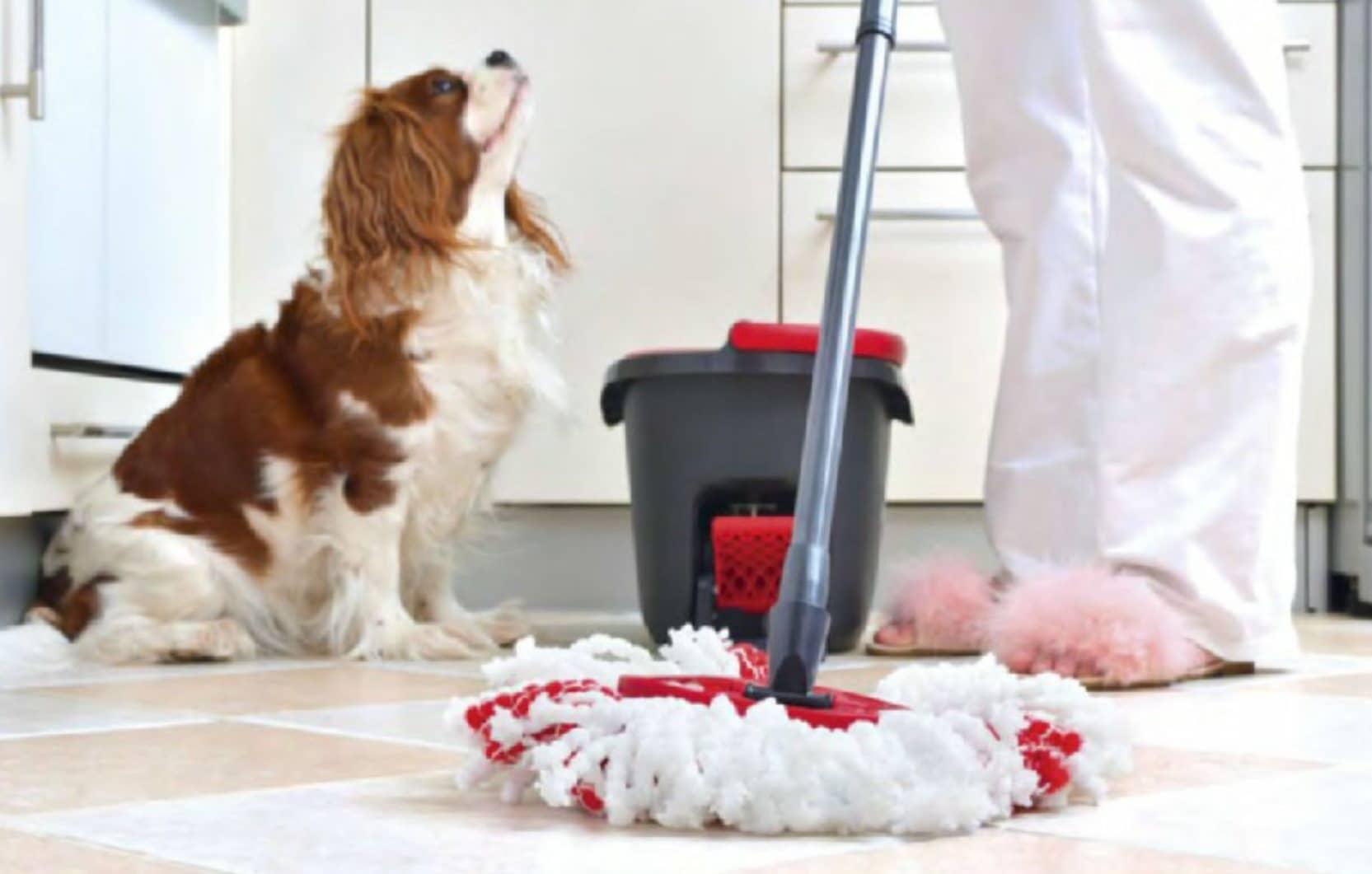 Cómo Limpiar Tu Casa Si Vives Con Mascotas