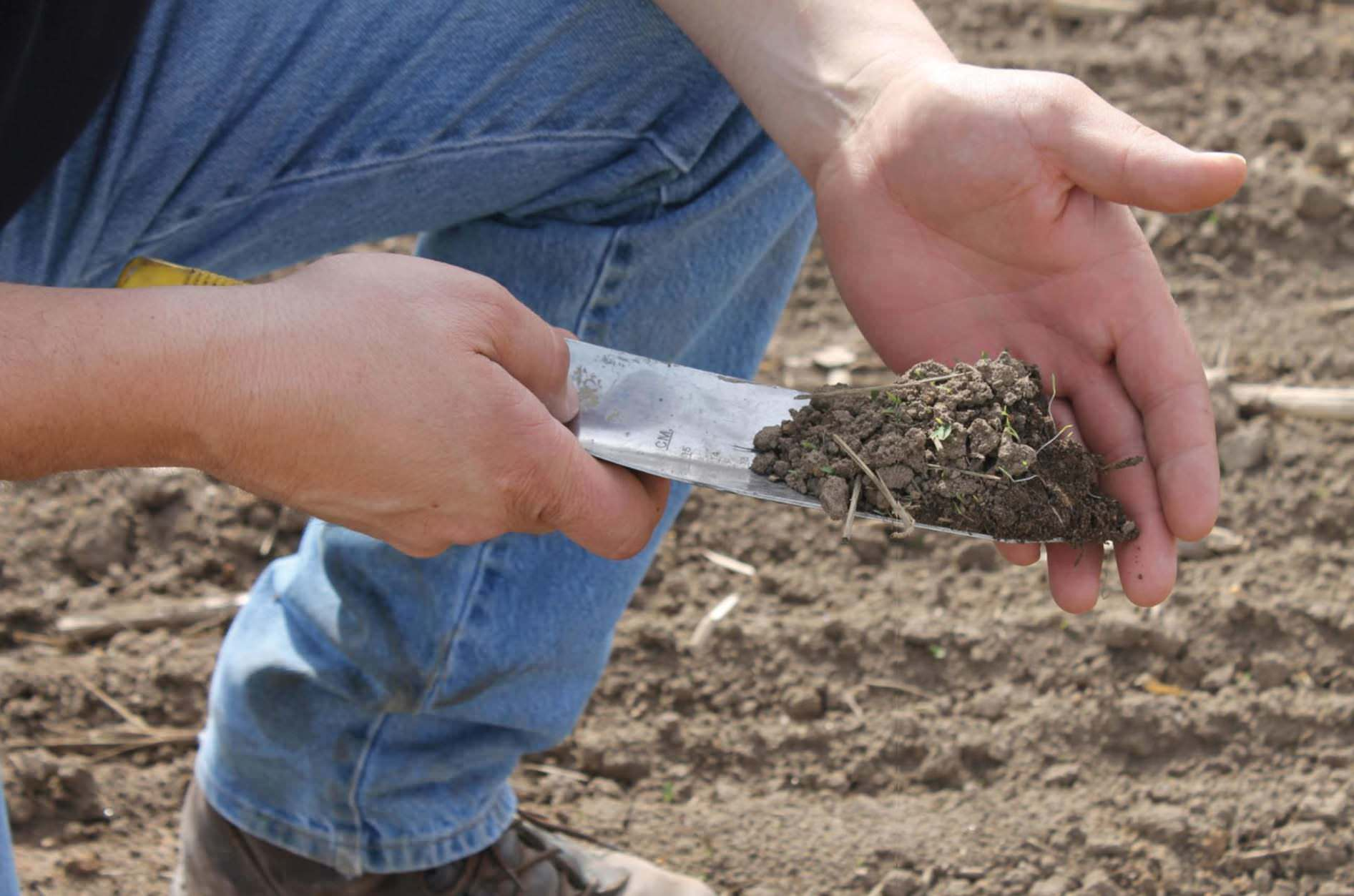 Protecting Soil Should Be Topmost Priority