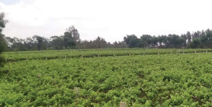 Contract Farming: A Boon And Future Of Agriculture In India