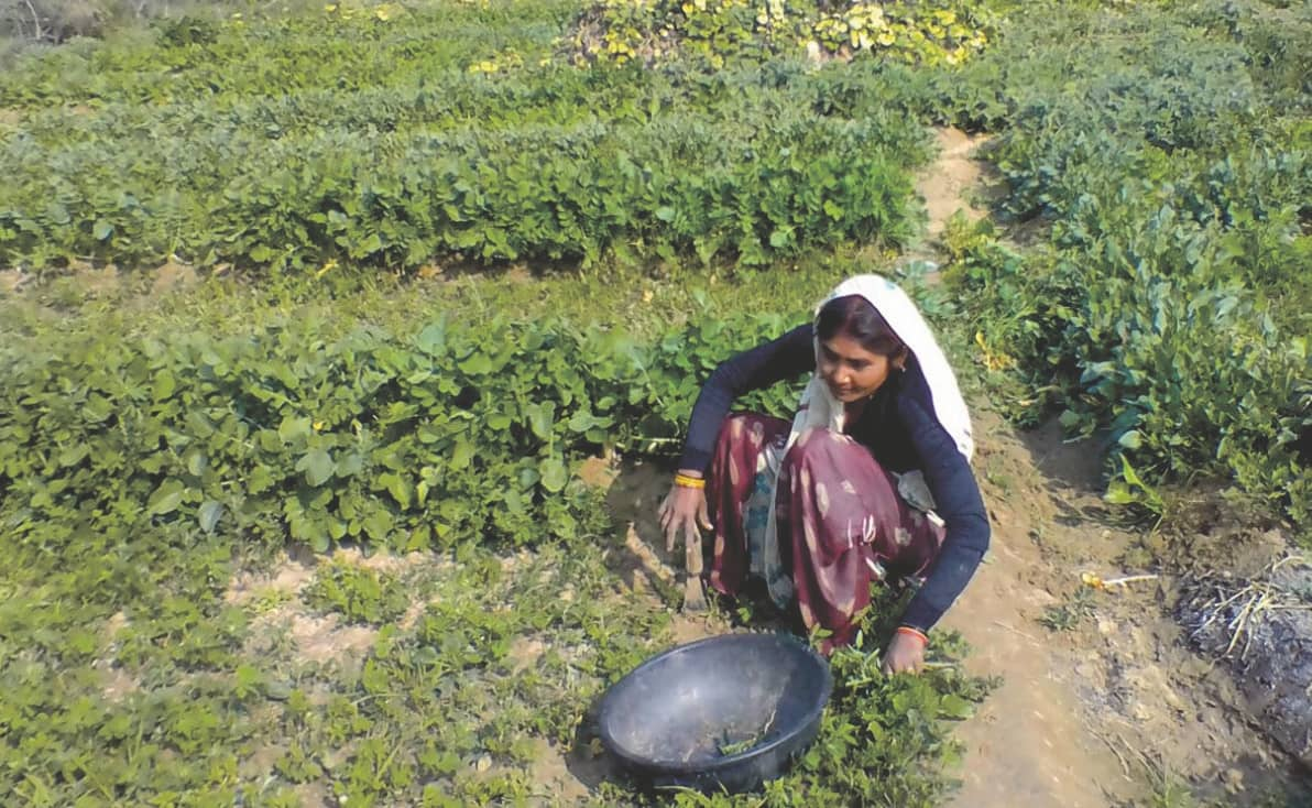 Covid-19 Impact On The Livelihood Of Small And Marginal Farmers