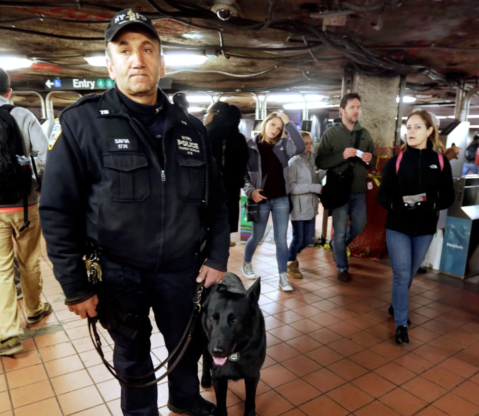 Dogs May Be the Best Line Of Defense Against Subway Attacks