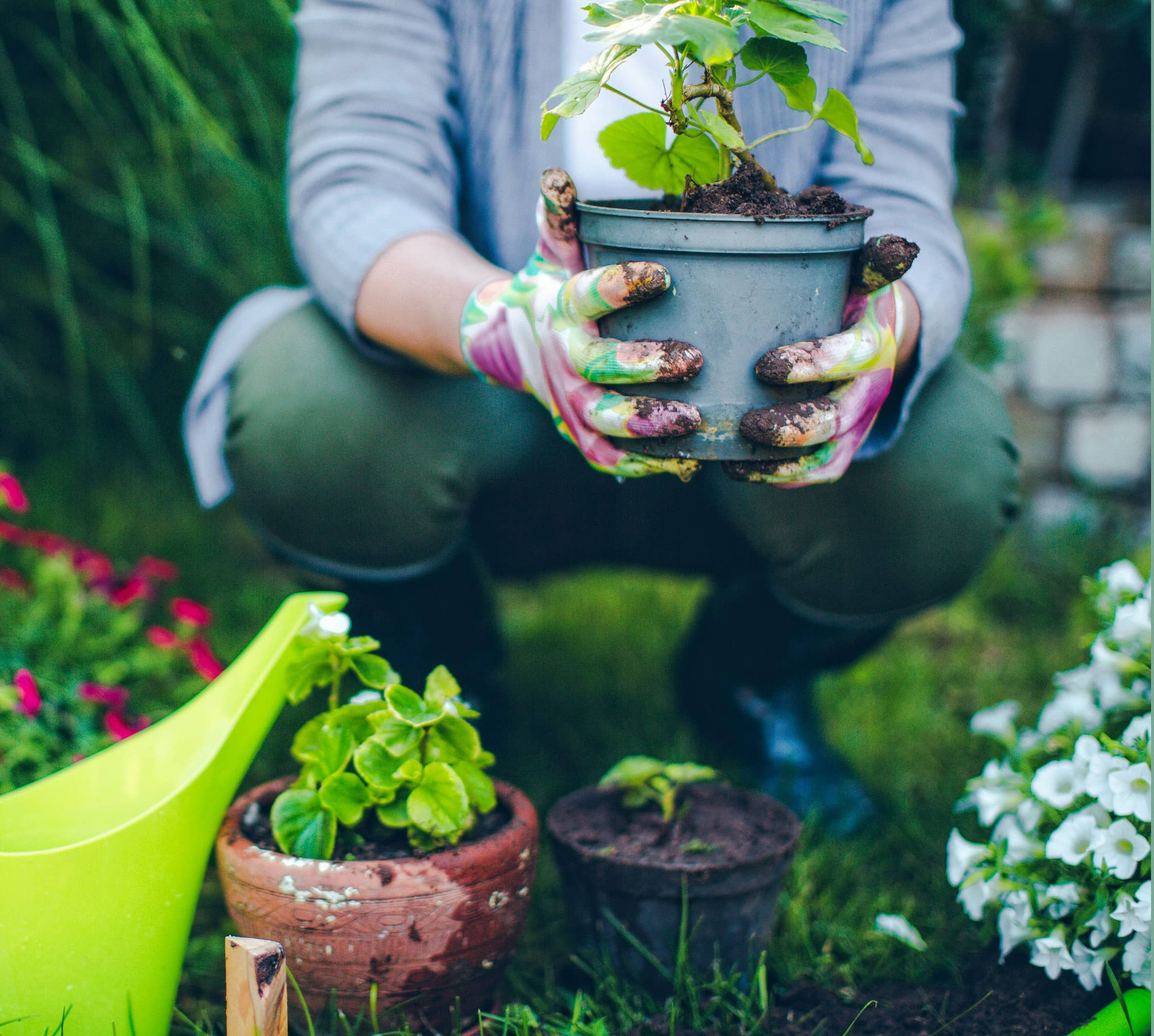 Feed The Soul: In Chaotic Times, Gardening Becomes Therapy