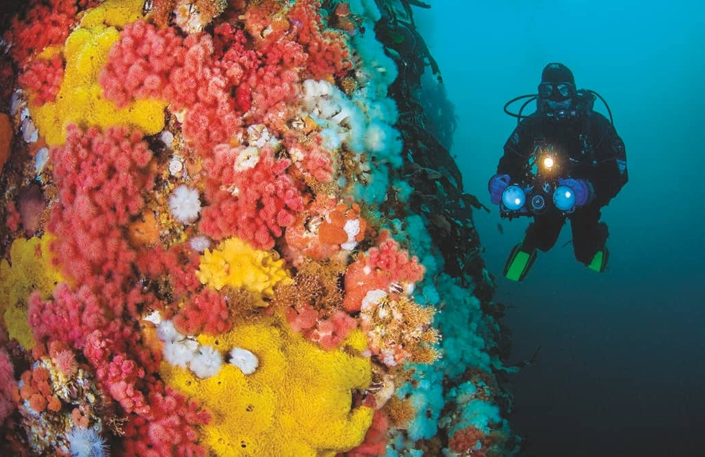 Five Lessons For Cold-Water Diving