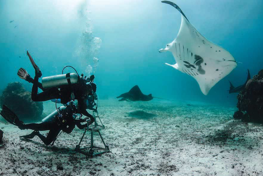 New Manta Ray Cleaning Station And Two Goby Species Discovered