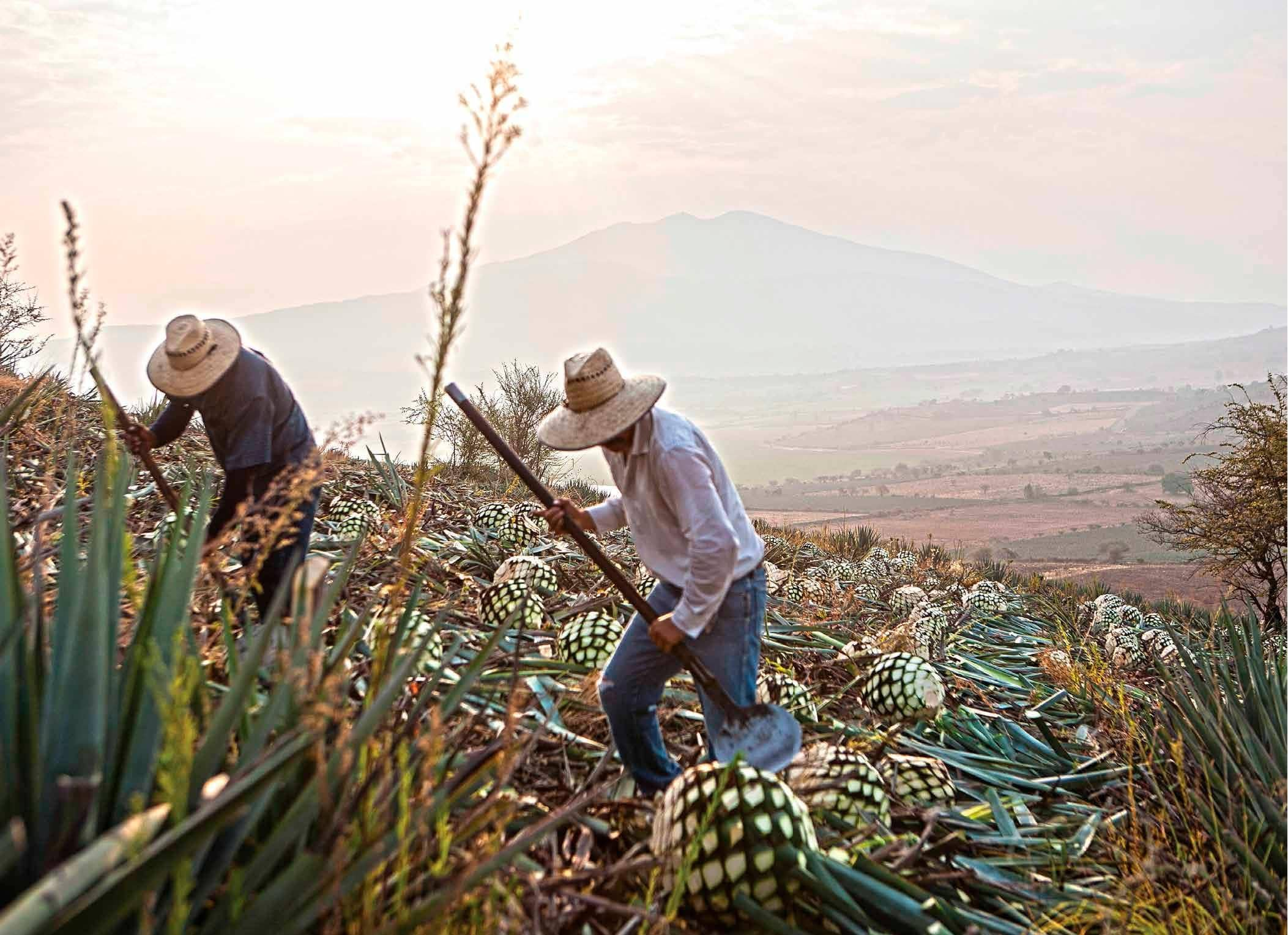 La nueva era del tequila