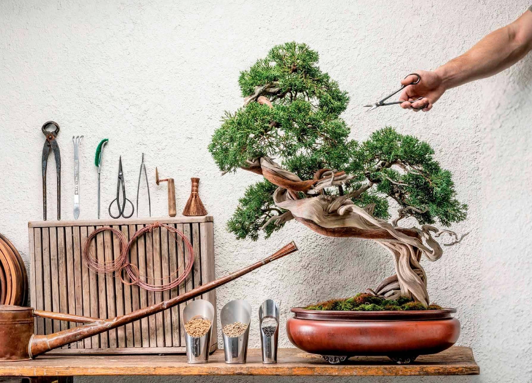 Herramientas pequeñas para árboles pequeños