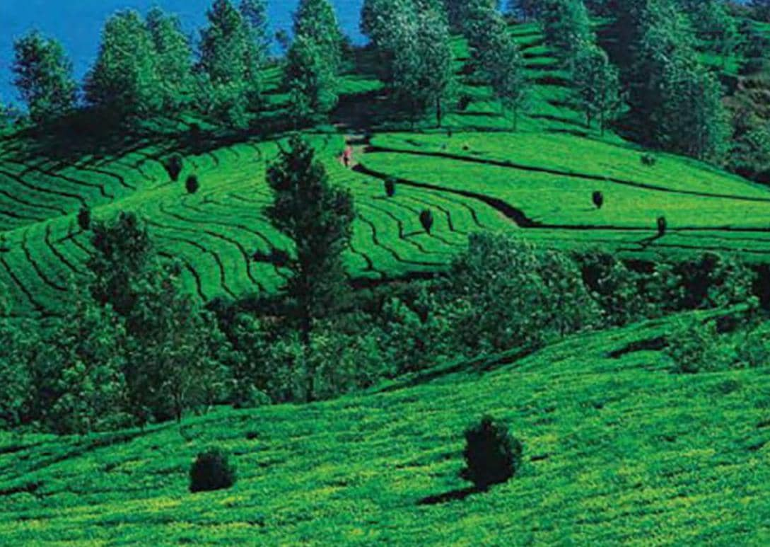 Coorg Is Calling!