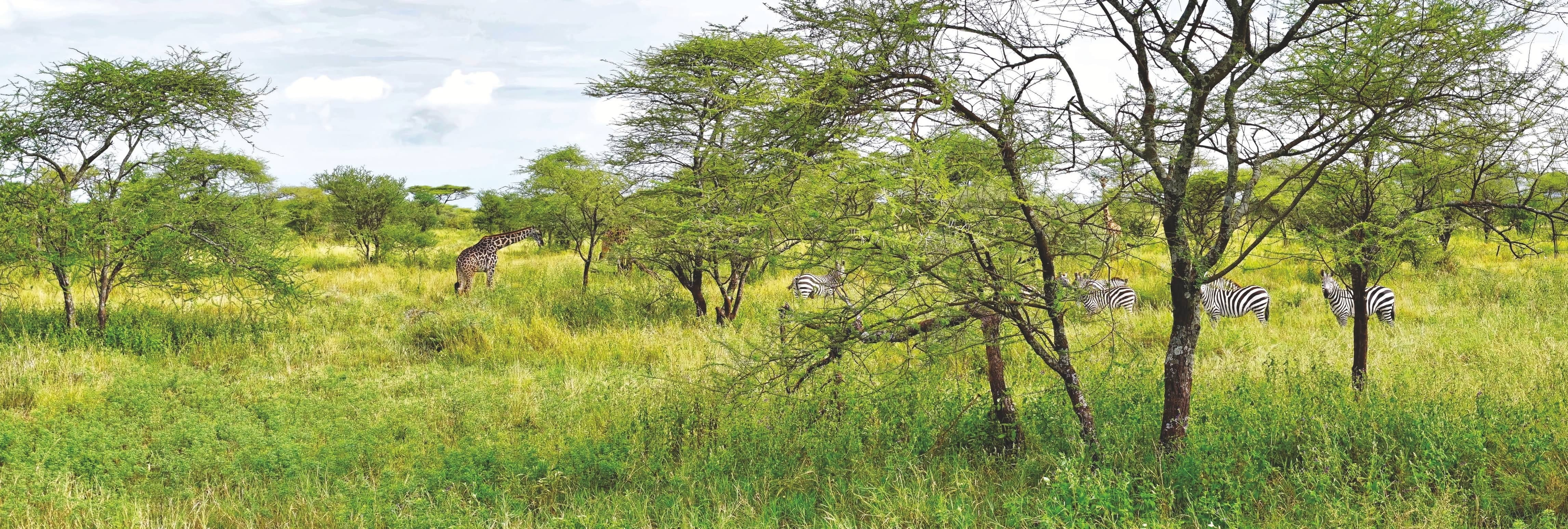 Green Dreams In Tanzania