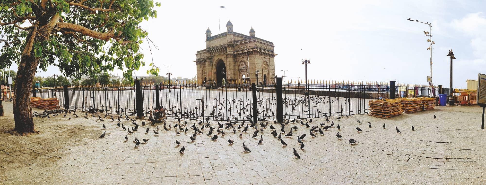 Mumbai Lockdown Pollution Levels Dip, Fauna Gets Space