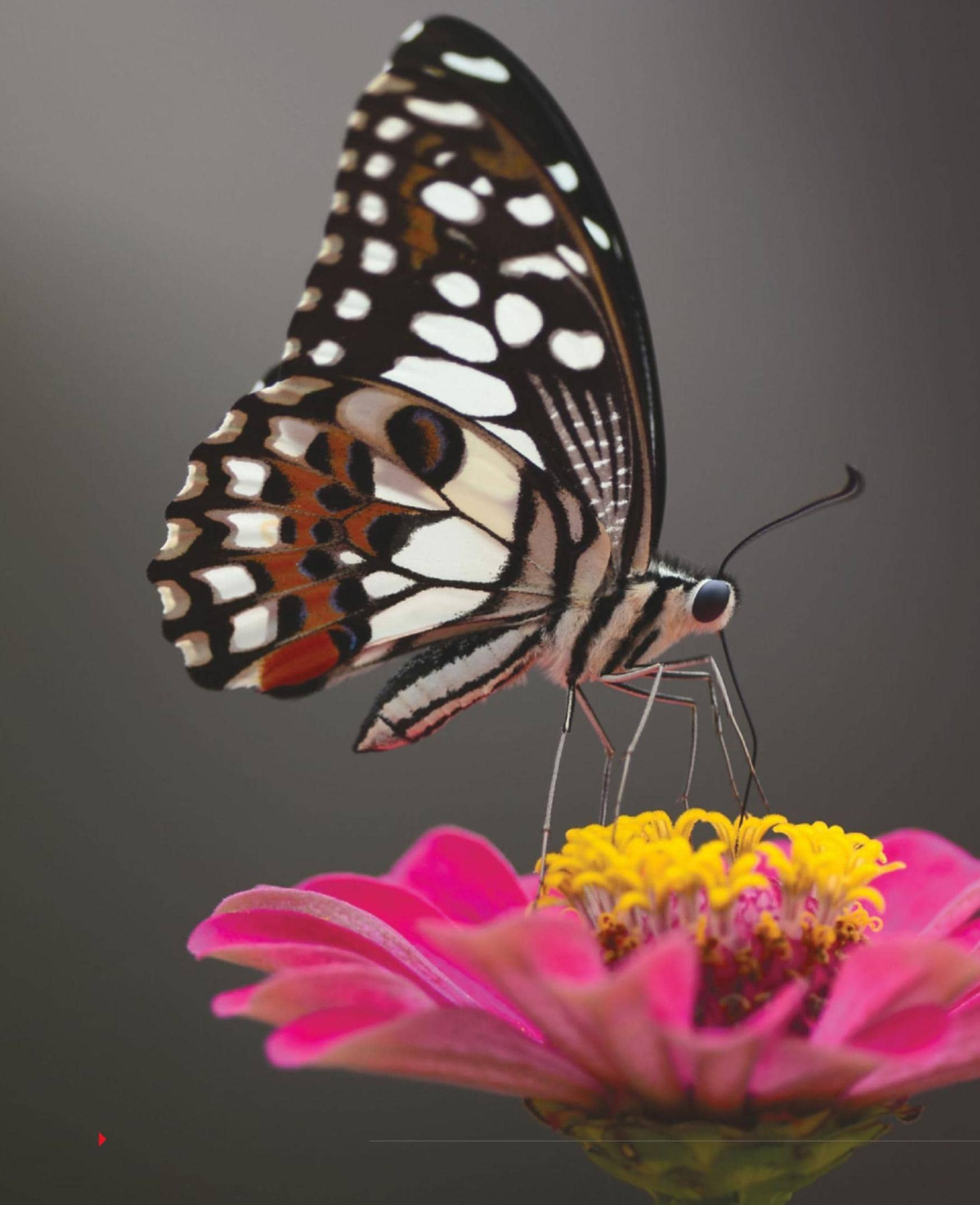The Fascinating World of Butterflies!