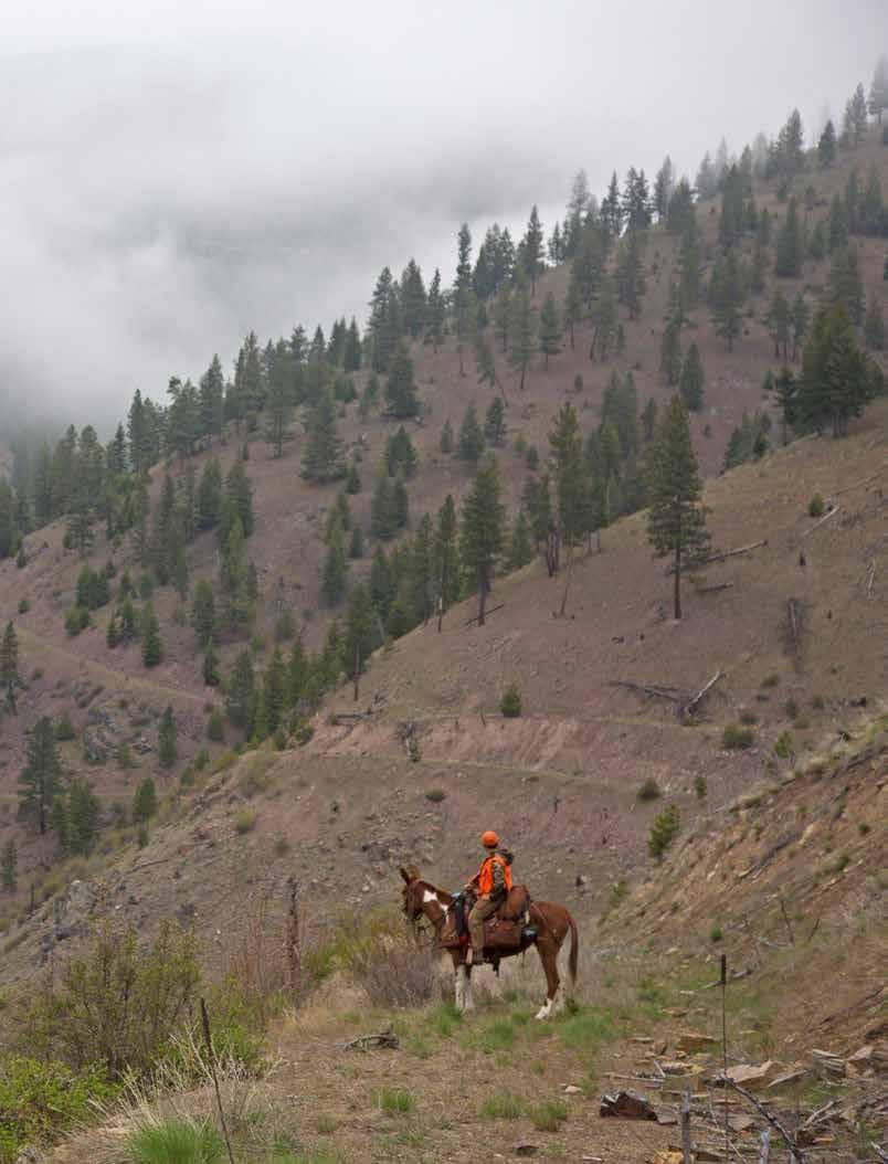 Go Montana By Mule