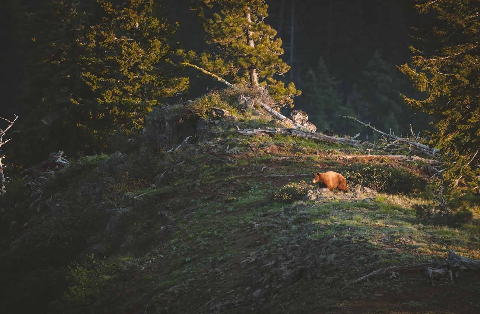 7 Things You Can Do To Preserve Bear Hunting